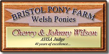 Welcome to Bristol Miniature Shetlands, home of Shetland Ponies in a Miniature Horse package!